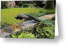 Peacock In Formal Garden, Kilmokea, Co Greeting Card
