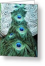 Peacock Plume Greeting Card