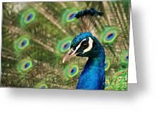 Peacock Profile Greeting Card
