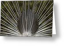 Peacock Tail Graphic Greeting Card