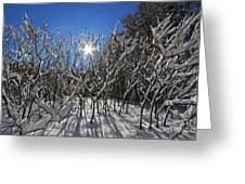 Peaking Sun Greeting Card