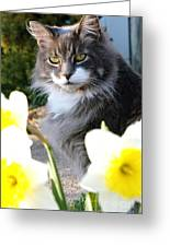 Peanut The Cat And Jonquils Greeting Card