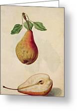 Pear   Pyrus Communis Greeting Card