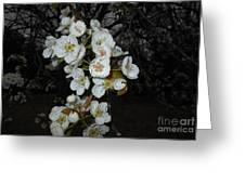 Pear Blooms And Tree Greeting Card