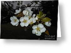 Pear Blooms Greeting Card