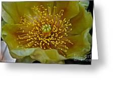 Pear Cactus Close Up Greeting Card