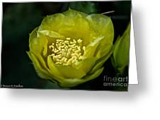 Pear Cactus Flower Greeting Card
