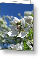 Pear In Bloom Greeting Card