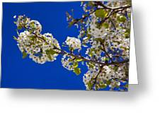 Pear Spring Greeting Card