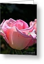 Pearl Pink Petals Greeting Card