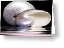 Pearly Nautilus Greeting Card