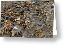 Pebbles And Shells By The Sea Shore Greeting Card