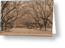 Pecan Orchard Greeting Card