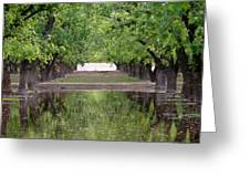 Pecan Trees IIi Greeting Card