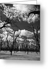 Pecan Trees Greeting Card