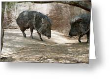 Peccary Greeting Card