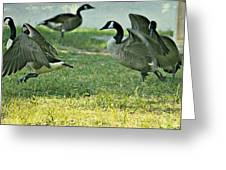 Pecking Order Greeting Card