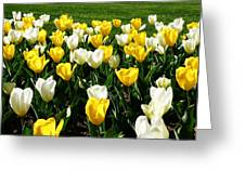 Peddler's Tulip 2012 3 Greeting Card