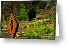 Pedestrian Crossing My Big Bear Booty Greeting Card