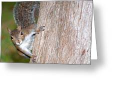 Peek A Boo Greeting Card