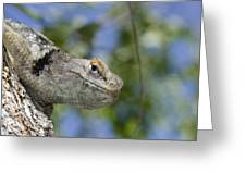 Peek-a-boo Lizard Greeting Card