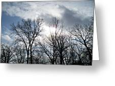 Peeking Sun Through The Branches Greeting Card