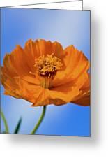 Pefect In Orange Greeting Card
