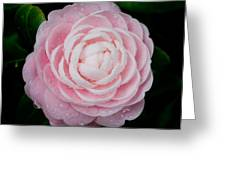 Pefectly Pink Greeting Card