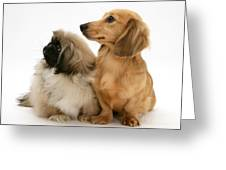 Pekingese And Dachshund Puppies Greeting Card