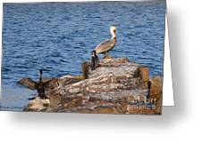 Pelican And Cormorants Greeting Card