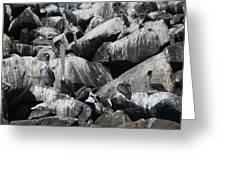 Pelican Camoflage Greeting Card