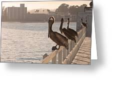 Pelican Gang Greeting Card