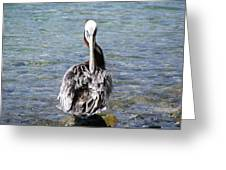 Pelican Grooming Greeting Card