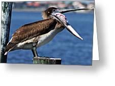 Pelican I Greeting Card