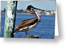 Pelican II Greeting Card