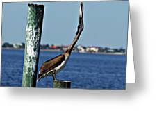 Pelican IIi Greeting Card