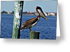 Pelican Iv Greeting Card