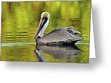 Pelican On A Golden Pond Greeting Card