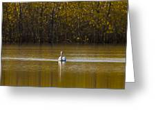 Pelican On Golden Pond Greeting Card