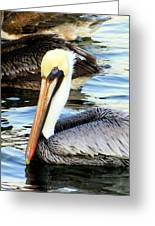 Pelican Pete Greeting Card by Karen Wiles