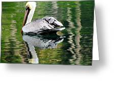 Pelican Reflecting Greeting Card