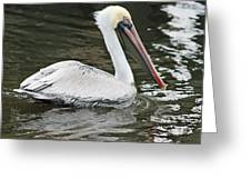 Pelican Solo Greeting Card