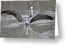 Pelican Span Greeting Card