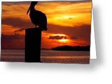 Pelican Sundown Greeting Card by Karen Wiles