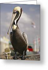 Pelican Visiting City Marina Greeting Card