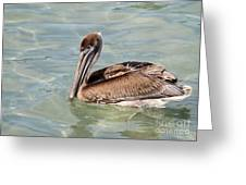 Pelican Waiting For A Catch Greeting Card