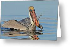Pelican With Catch Greeting Card