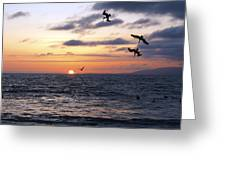 Pelicans Diving At Sunset Greeting Card