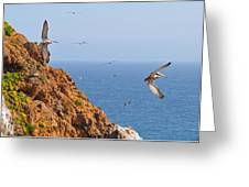 Pelicans Off The Point Greeting Card