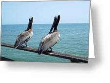 Pelicans On The Pier Greeting Card